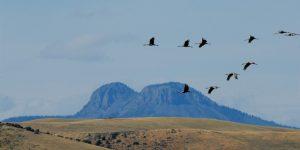 Cranes flying past Bears Ears
